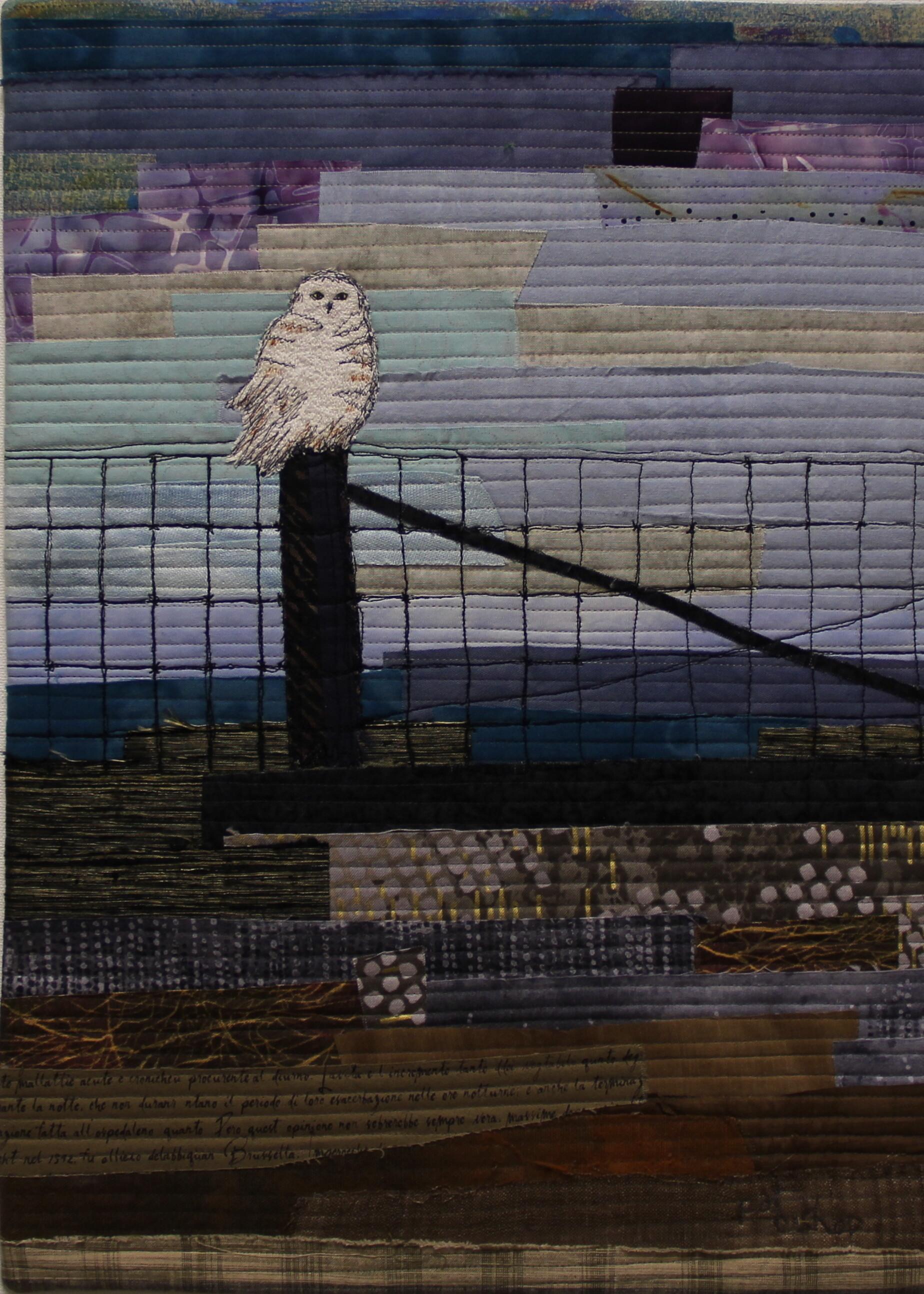 Owl in the Door